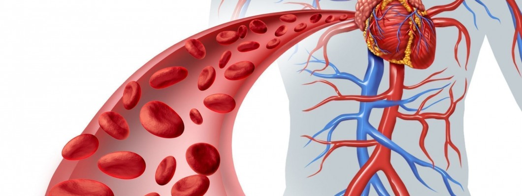 4 nutrients for improving the heart and vascular system